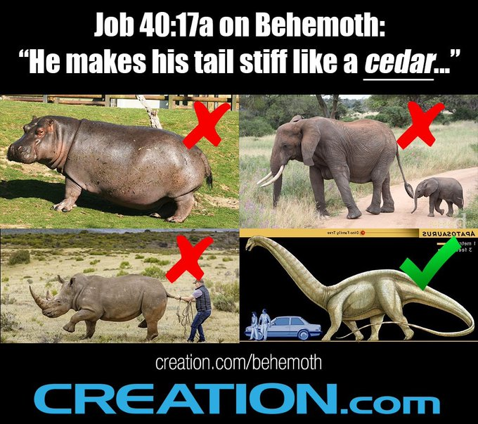 Behemoth in the Bible must have been a dinosaur.